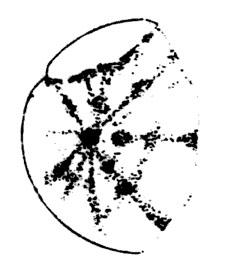 Drawing of Venus by R. M. Baum